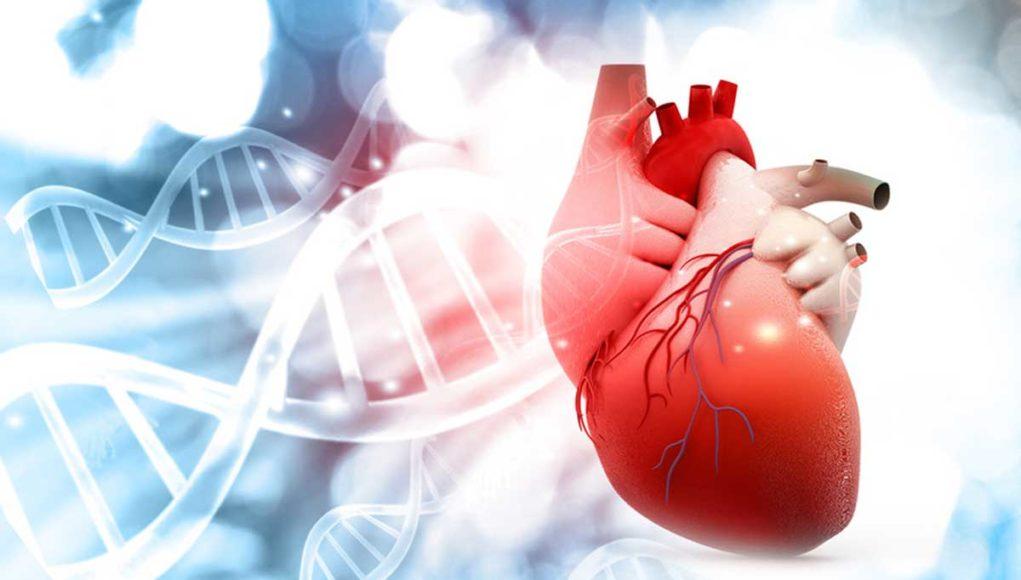 Último estudio: el vaping no está asociado con la enfermedad cardiovascular Heart-study-1021x580