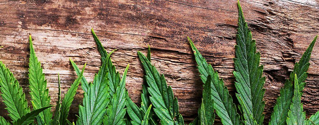 cannabis on wood