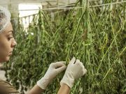 Small Business Loans For Marijuana Businesses