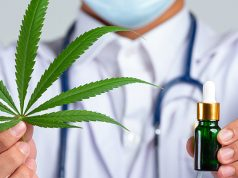 Doctor holding cannabis and oil